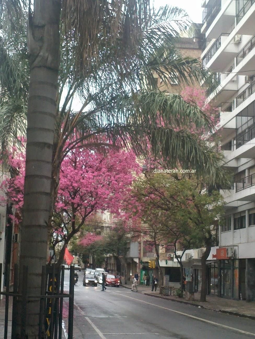 Arboles de colores_Rosario_Argentina_http://www.dianateran01.blogspot.com.ar/