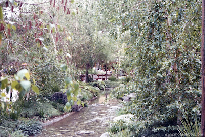 Bear Country Disneyland creek 1975 Bears Jamboree trees