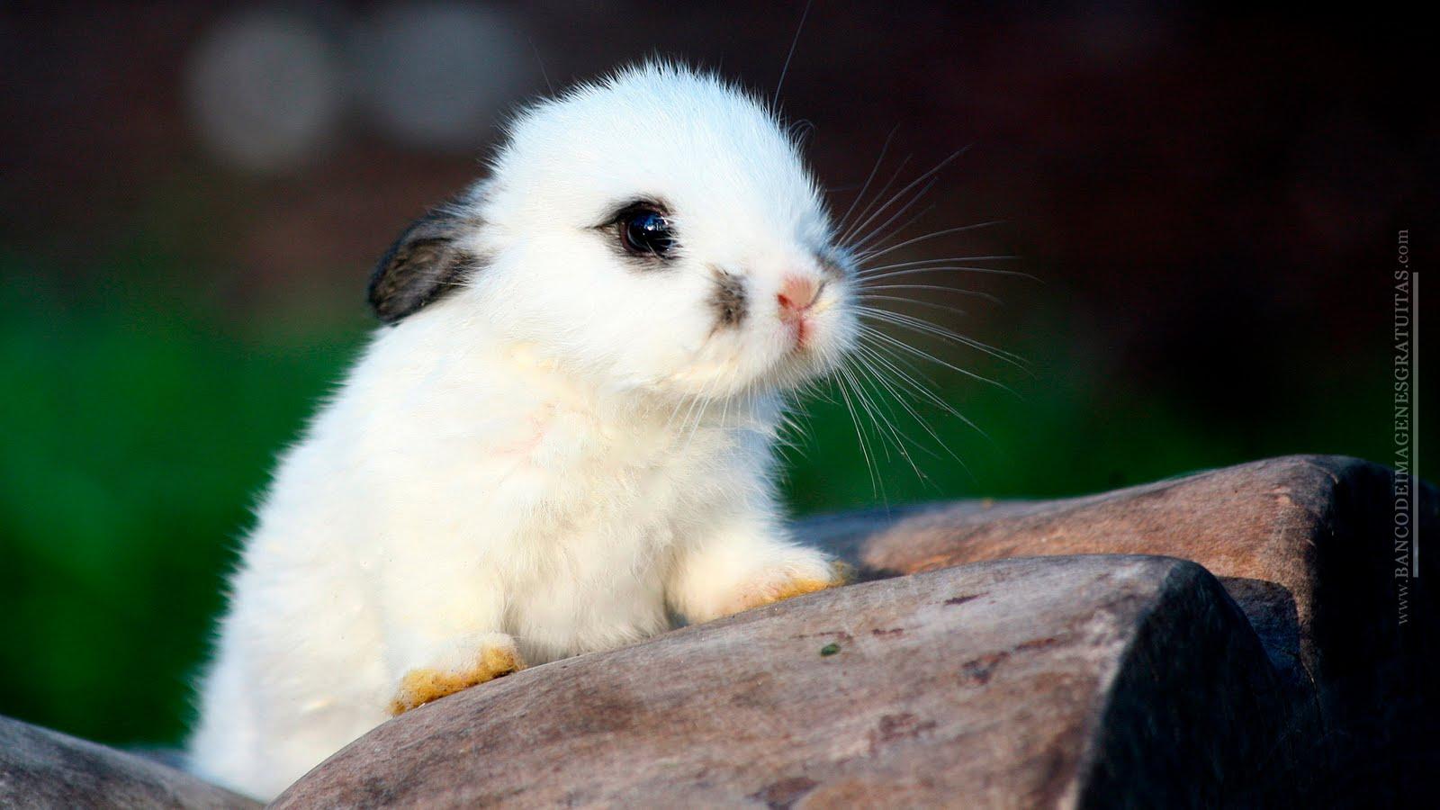 imagenes de animales lindos - Nuestra fauna (19 fotos de animales muy lindos) BANCO
