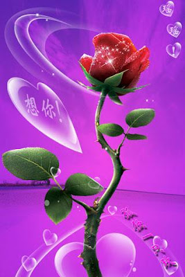 wallpaper s for mobile and pc lovely roses wallpapers for