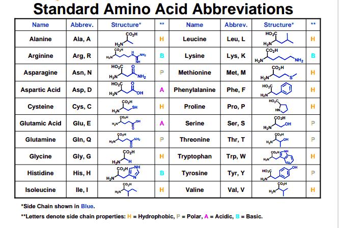 Amino acid abbreviations