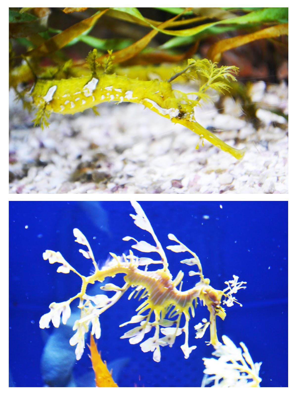 Polkadots On Parade Aquarium Of The Pacific Magellanic