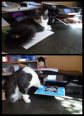 Anakin The Two Legged Cat & the printer