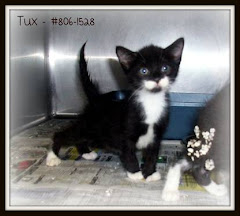 UPDATES 7/22 7/19/11 5 Week Old Kittens and Others On Deathrow GA TRANSPORT THIS WEEKEND TO NJ