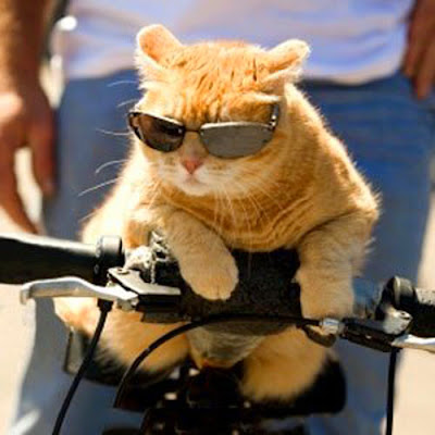 kucing gokil pakai kacamata