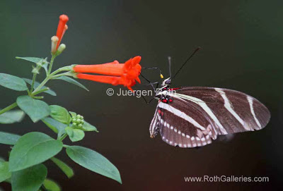http://whereintheworldisjuergen.blogspot.com/2013/03/macro-butterfly-photography-at-magic.html#.U1UCuqKriuI