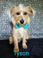 ADOPTABLE DOG OF THE WEEK!!! Click photo for all info AND a video!  OPT TO ADOPT!