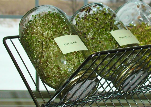 Image result for sprouting jar