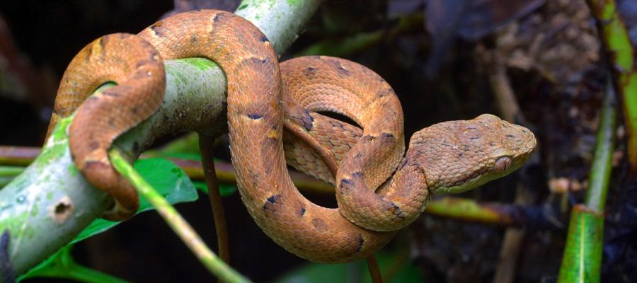 Scientia antiquitatis luoghi costa rica riserva - Gli animali della foresta pluviale di daintree ...