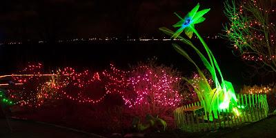 Butterfly Pavilion: Living Lights