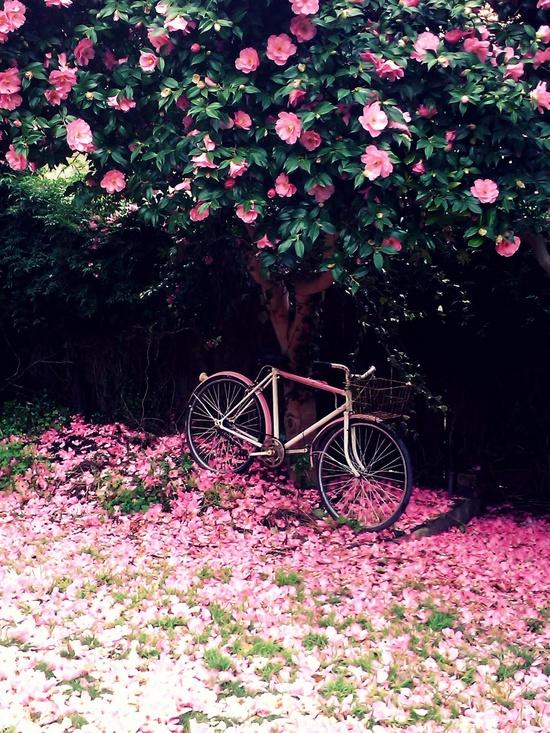 Poema Fecundo aroma de flor Autor Absalòn Opazo 500f0a8de0ffe429627ce77c57a08044