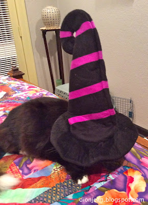 Maggie the cat in the hat from BarkBox