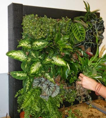 Curso profesional de jardines verticales en madrid for Jardines verticales panama