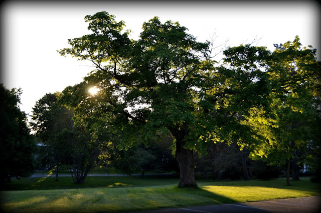 Shade Tree, Marian Court College, swampscott, massachusetts