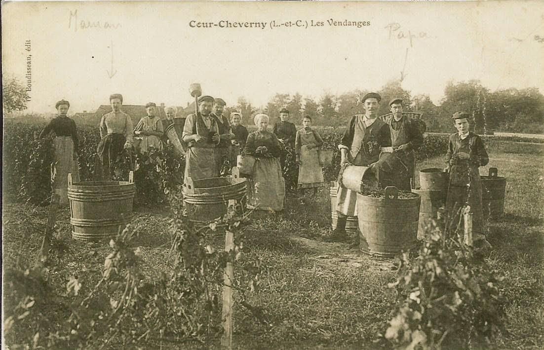 Vendanges - Cour-Cheverny