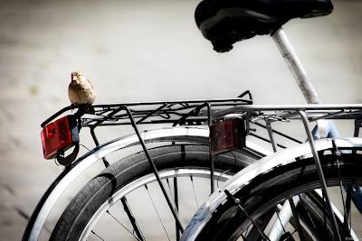 Vou de bike, by José Lins / PhotoConversa