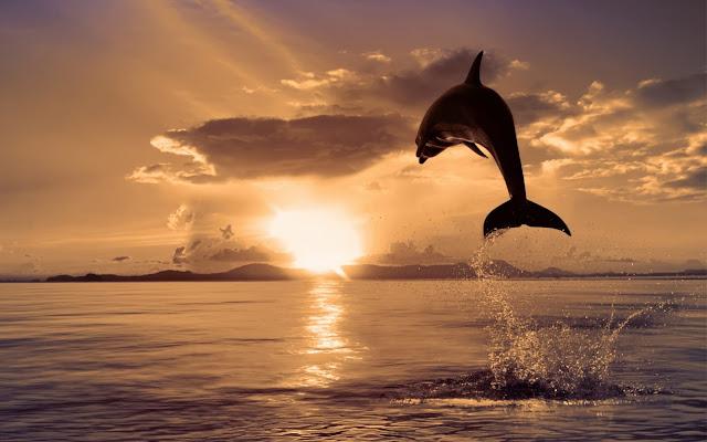 Imágenes y Fotos de Delfines Saltando al Atardecer