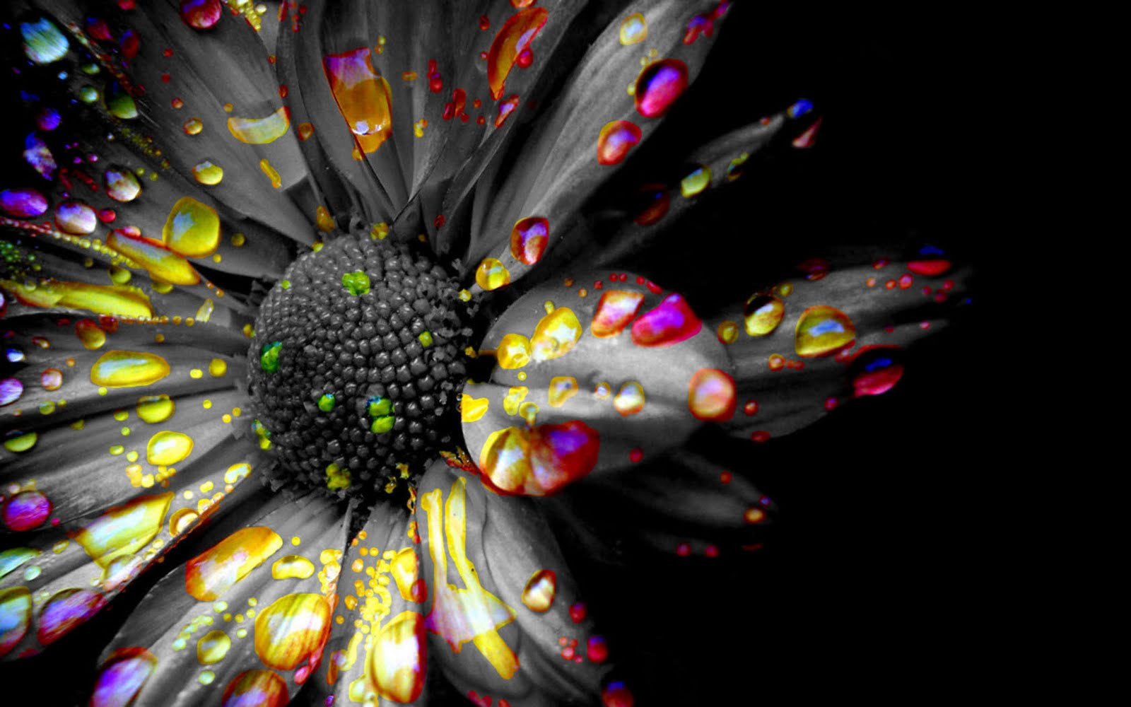 Black and white spot color flower