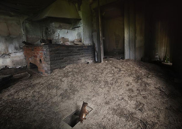 animal living in abandoned house