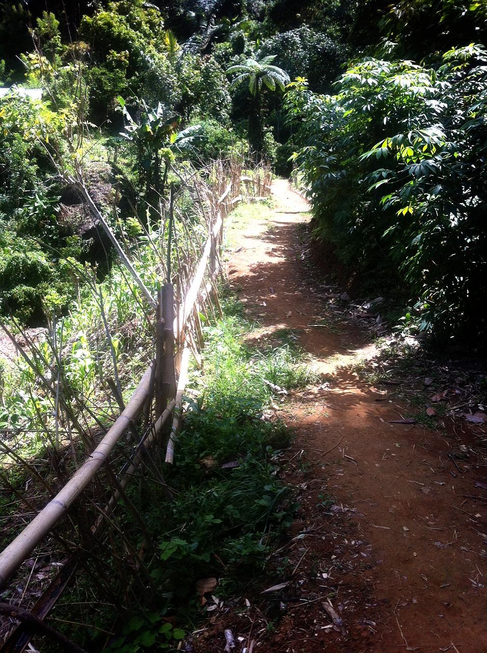 jalur menuju air terjun indo rannuang polewali mandar