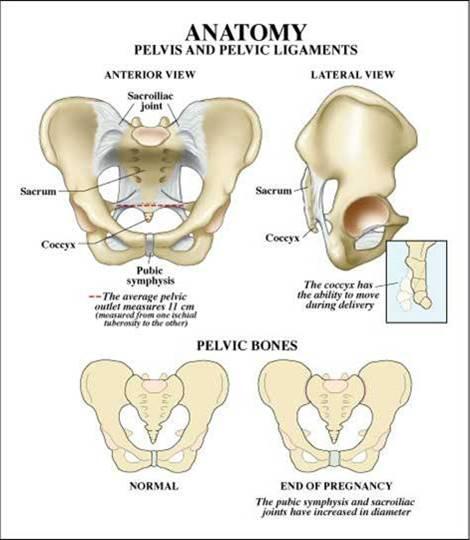 Anatomi Tulang Panggul