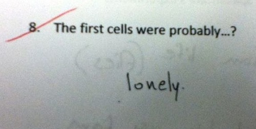 6 Hilarious Answers In Examination Sheets