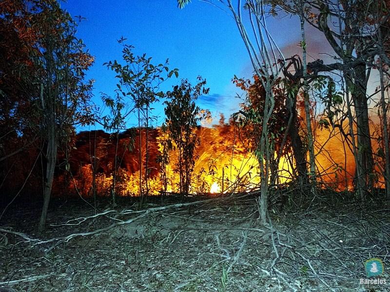 Resultado de imagem para queimadas no amazonas