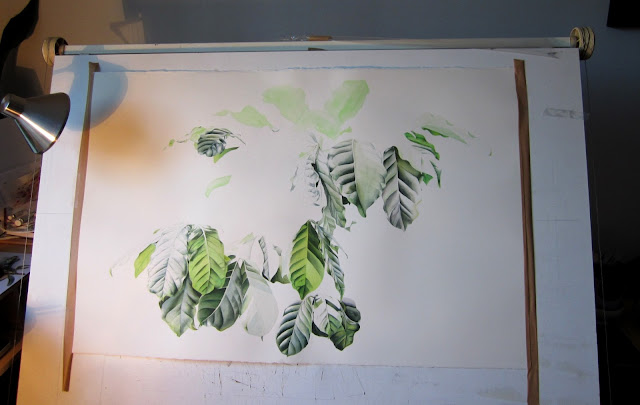 Coffea arabica painting by J R Shepherd
