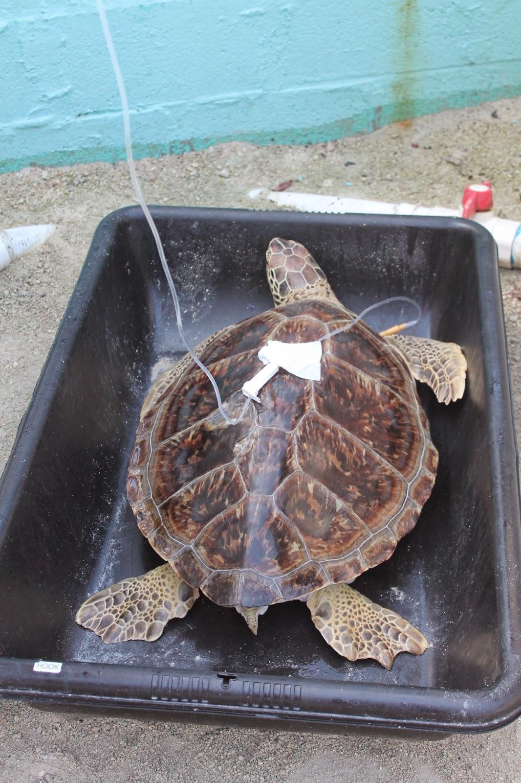 Mari s 1 enfant et un tour du monde road trip floride tape 2 les keys - Bassin tortue floride strasbourg ...