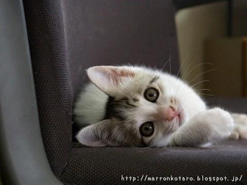 椅子の上でくつろぐ子猫