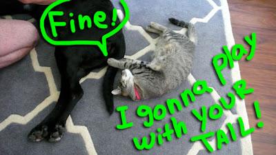 cat-dog-play-02