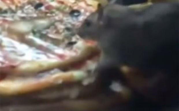 Rato se alimentando em restaurante