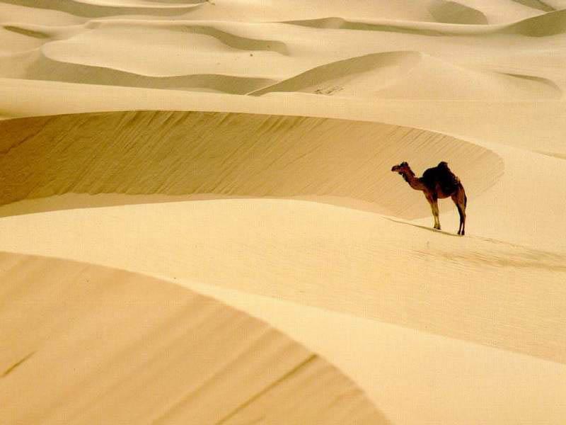 La vida en los desiertos: animales, plantas y ecología  - imagenes de animales que viven en el desierto