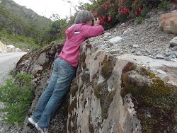 Flores de Coicopihue - no caminho entre Puerto Yungay e Tortel.
