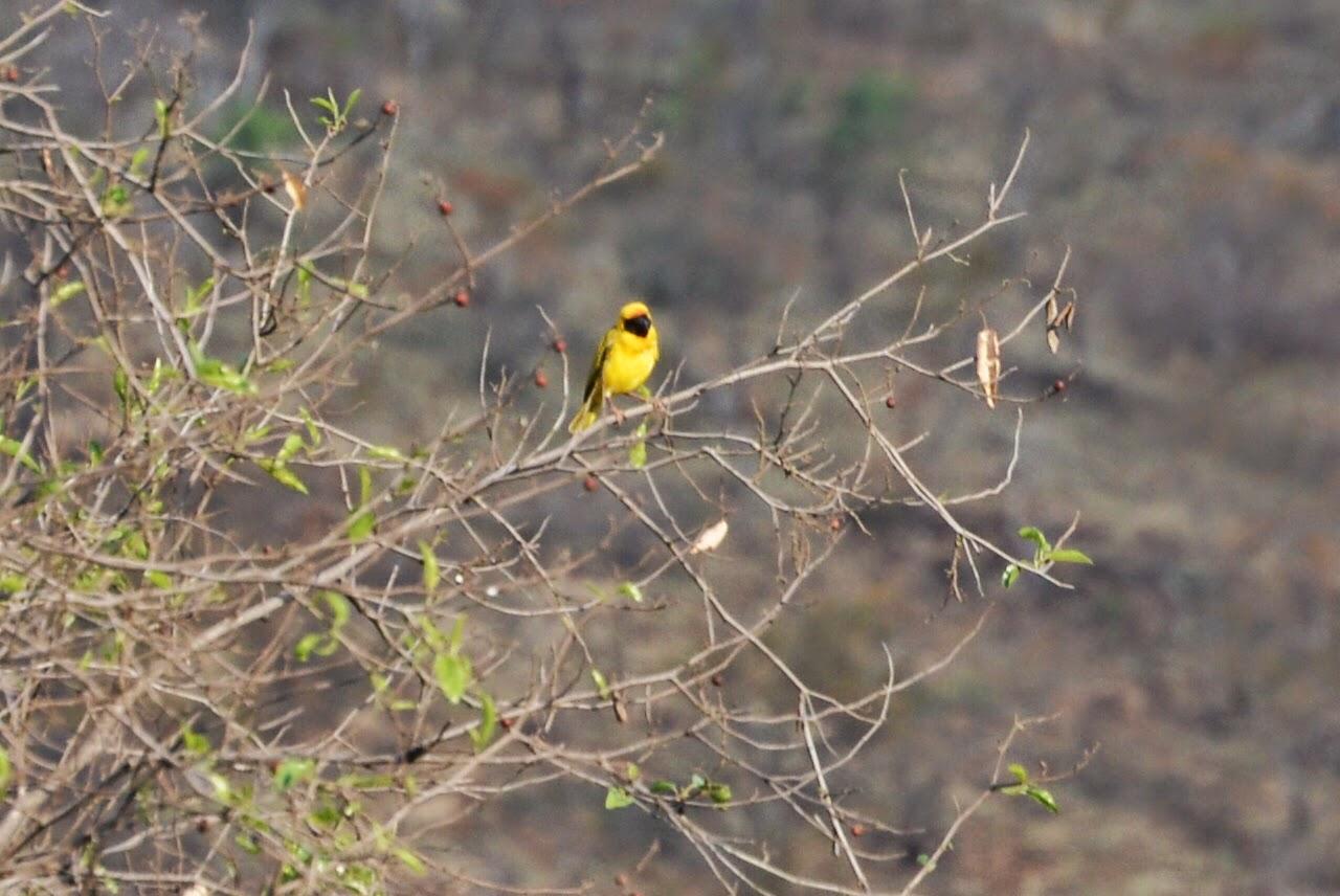Las aves tejedoras | La Ciudad Silvestre
