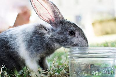 Cutie Bugs Bunny Rabbit