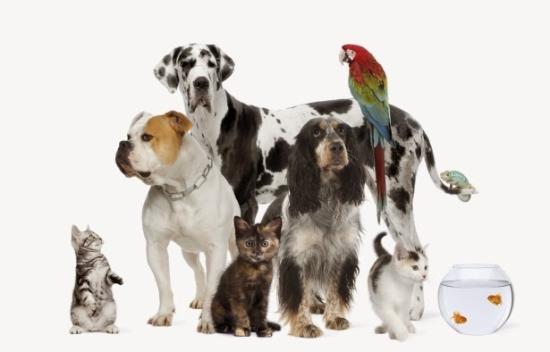 أكثر ملايين حيوان أليف رومانيا!