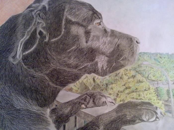 drawing dog miya