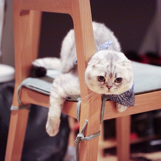 roku-the-cat-instagram, cute