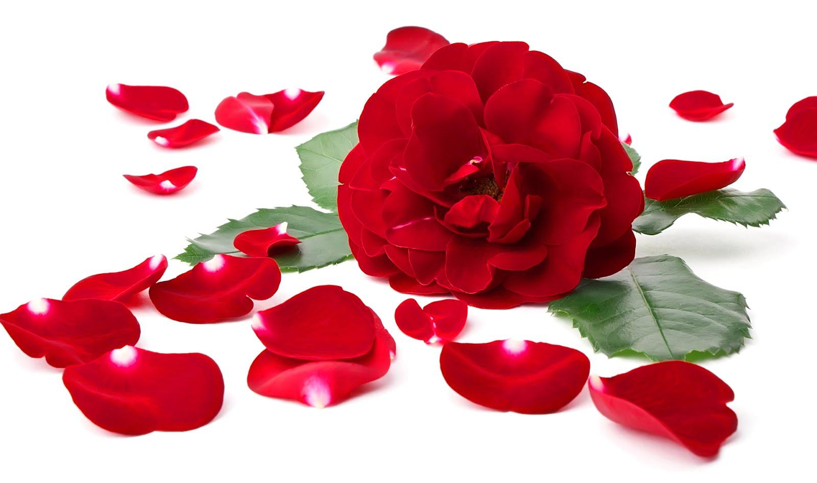 imagenes-de-amor-para-el-14-de-febrero-dia-de-san-valentin-amor-y