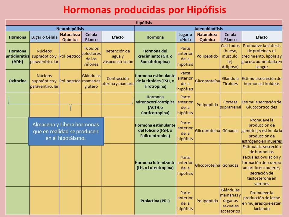 hormonas hipofisis: