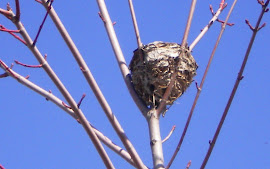 Nest on a limb