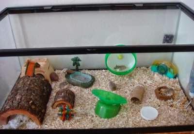 kandang-hamster-dari-kaca