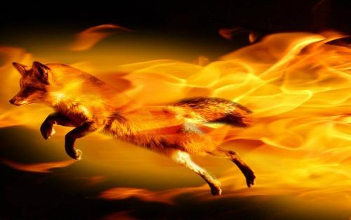 hinh nen may tinh firefox