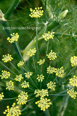 august-in-the-garden-flowering-dill