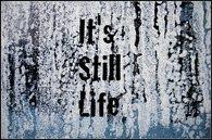 Still Life 2012
