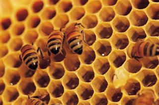 قفران النحل