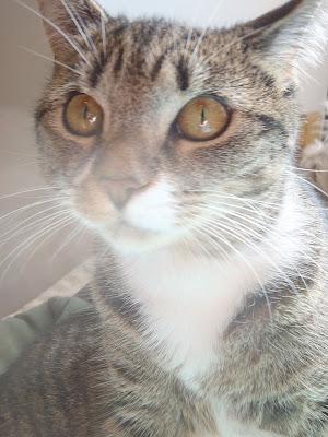 Cosmo cute kitty sunbathing