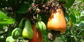 ciri-ciri, klasifikasi dan reproduksi tumbuhan berbiji