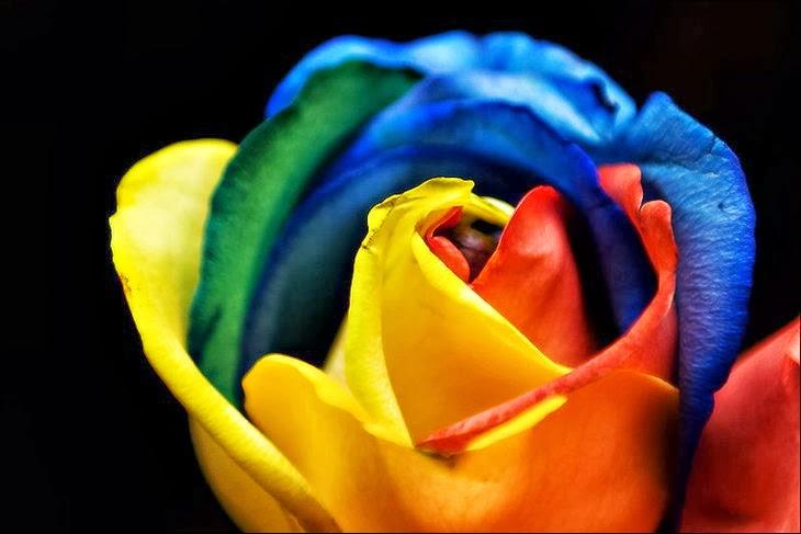All 4u hd wallpaper free download beautiful rainbow for Rainbow rose wallpaper